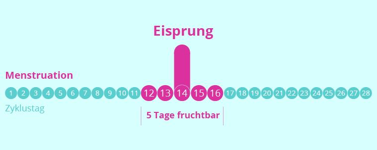 Pms Schwanger Zyklus